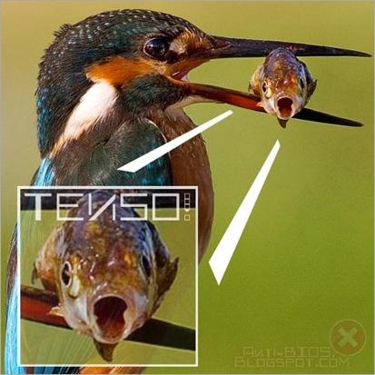 O peixe que ficou TENSO, de EdgardEllen