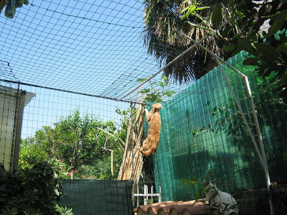 Recinzione Giardino Per Gatti.Rete Per Gatti Giardino Come Allontanare I Gatti Dal Proprio