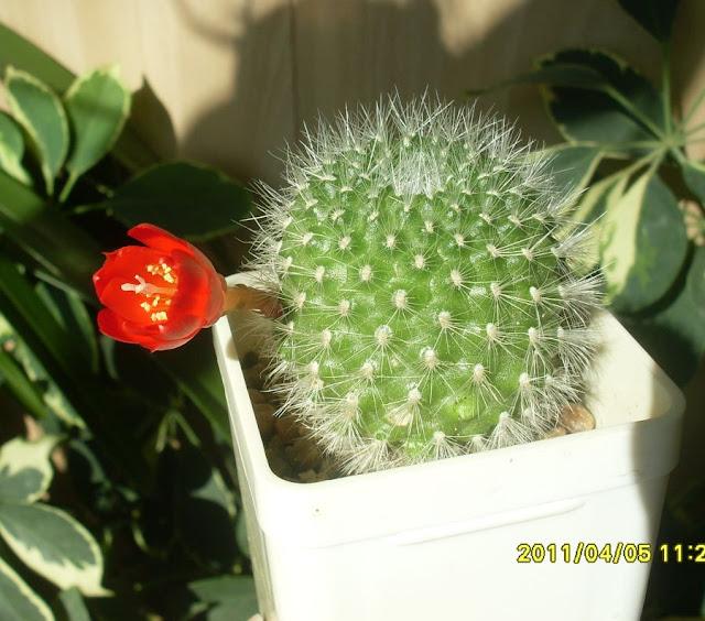 Наши кактусы - Страница 7 SDC17990