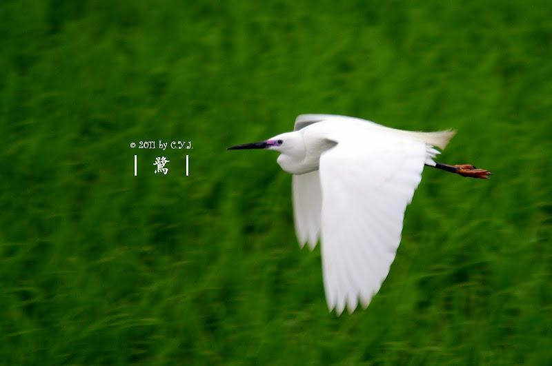 2011.04.16 散步去