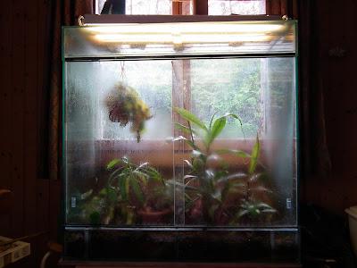 Grand terrarium à Nepenthes à vendre DSCF2315