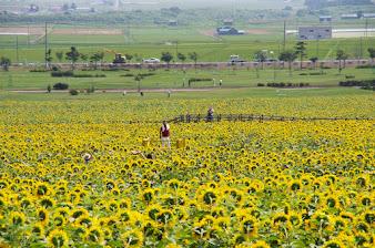 遊覧車ひまわり号からの景色