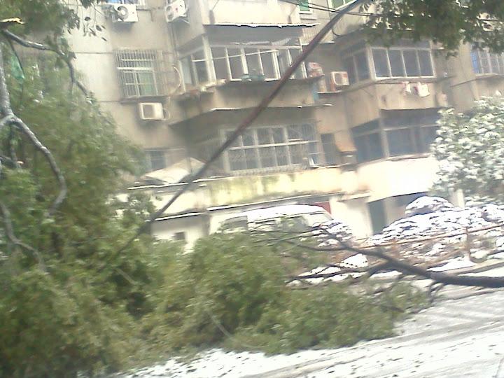 家附近大量树木受灾,连电线都压断了
