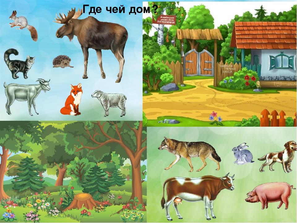 Картинки животные и где они живут