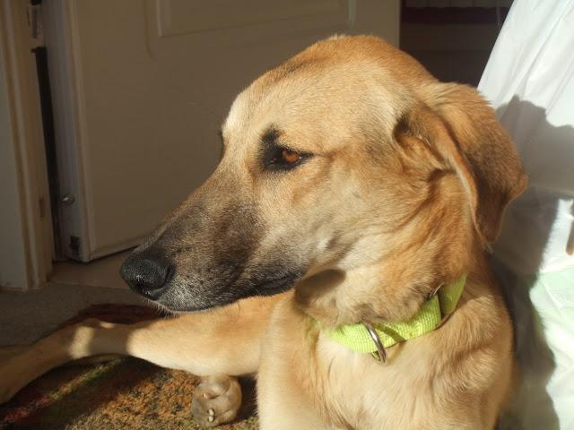 Dudo, corredor canino busca adoptante P_DSCF9517