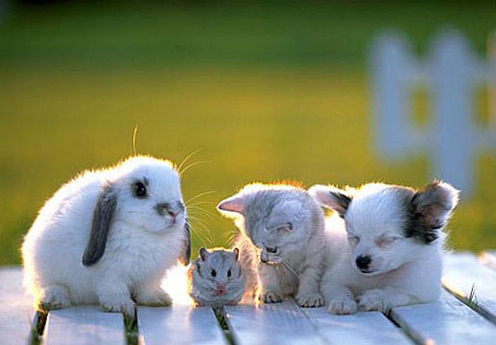 cute group adorable little creatures