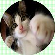 Cute Cat free(Look Photo)