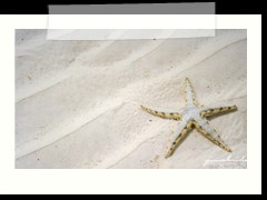 wild starfish at Anda Global Beach Resort