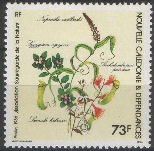 N.viveilis.jpg
