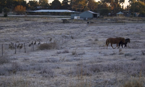 roos and horses