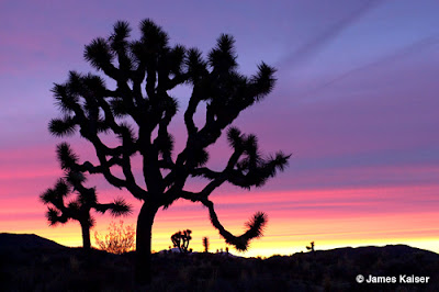 Joshua Tree Sunset, James Kaiser