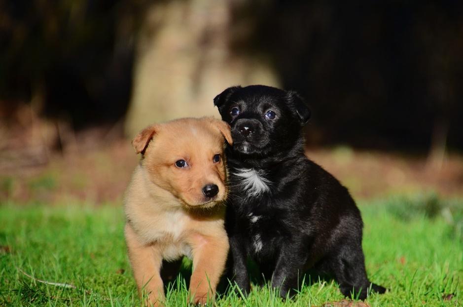 convivencia entre perros de diferentes razas