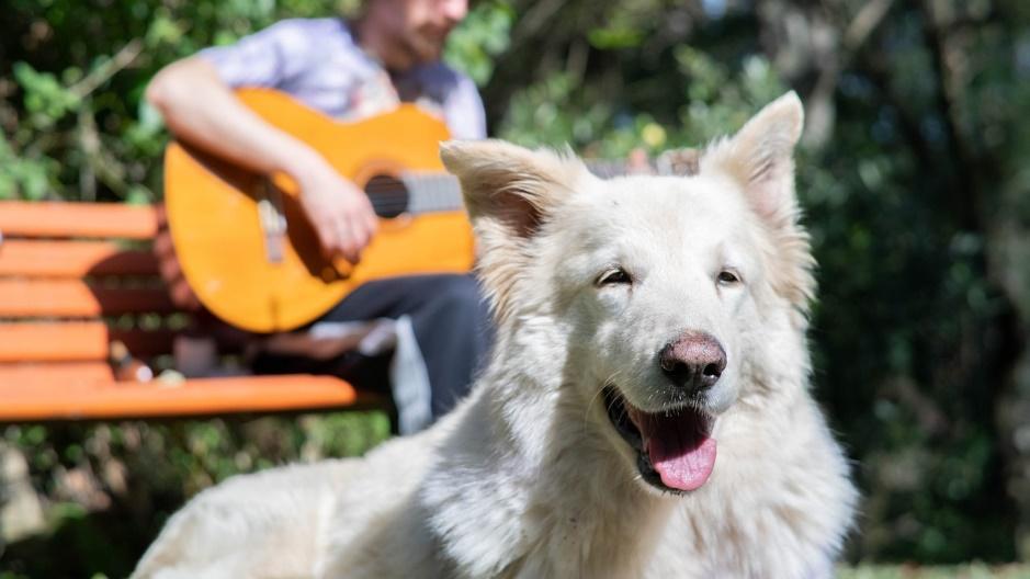 Cómo Proteger a mi Perro del Sol por su Bienestar