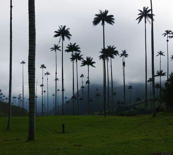 טיול מסע לקולומביה סלנטו עמק קוקורה קולומביה אהובתי
