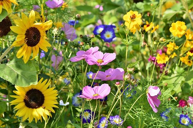 bulk wildflower seed