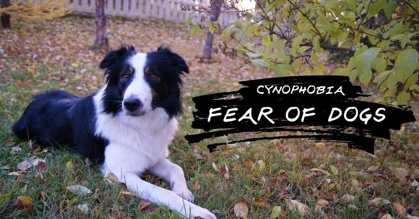 Cynophobia (An Overview)