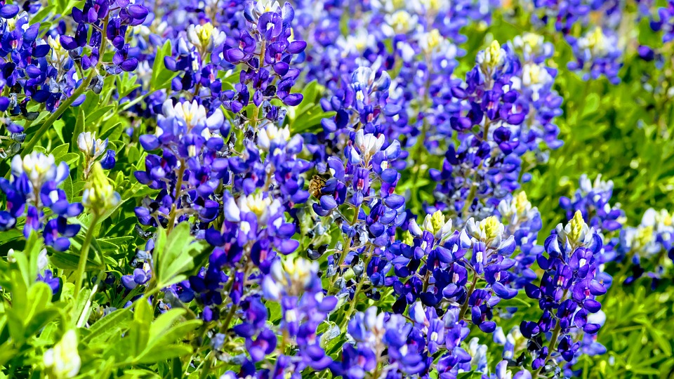 Native Plants That Thrive In Dallas Wikilawn