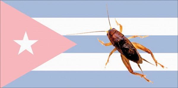 印度短尾蟋蟀與古巴國旗的合成圖。(取自美國綜合與比較生物學學會網站)