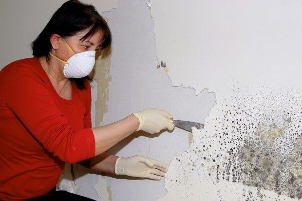 woman removing mold from a wall