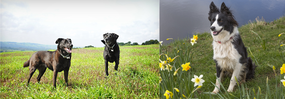 Keep your dog entertained during lockdown with our handy guide from Devon Farm Holidays.