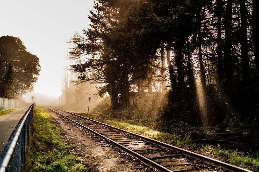 gray rail beside trees during daytime