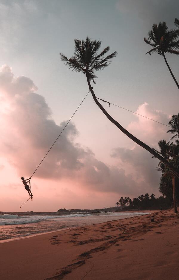 foto de um homem balançando em uma corda pendurado num coqueiro