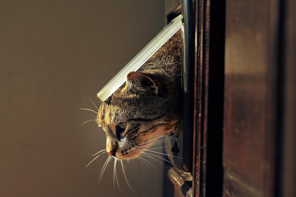 cat in cat flap