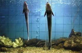 The Marine Aquarium : Zoological Survey of India