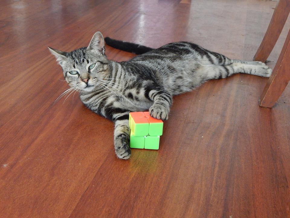 cat-633080_960_720.jpg