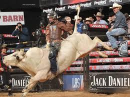 Image result for bull riding