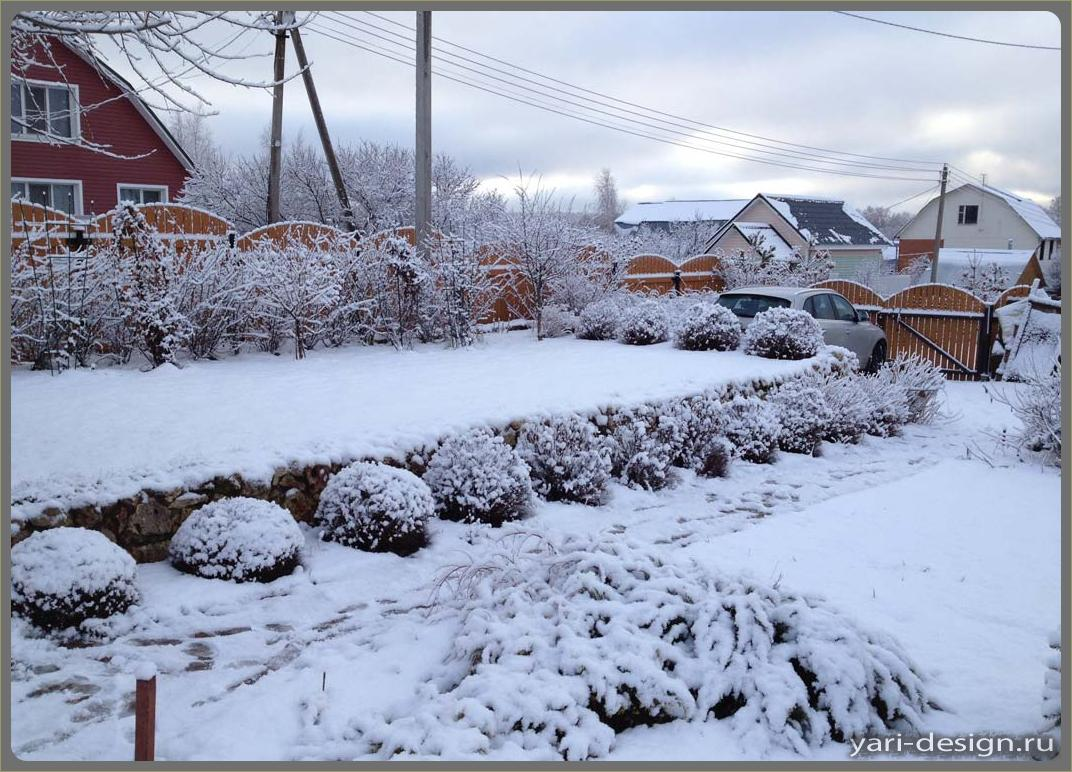 Спирея под снегом