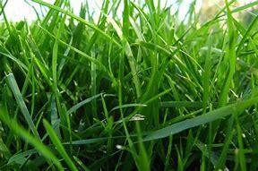Obraz znaleziony dla: trawa