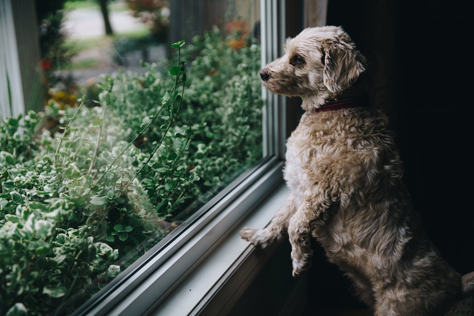 Discover These Dog-Friendly Destinations