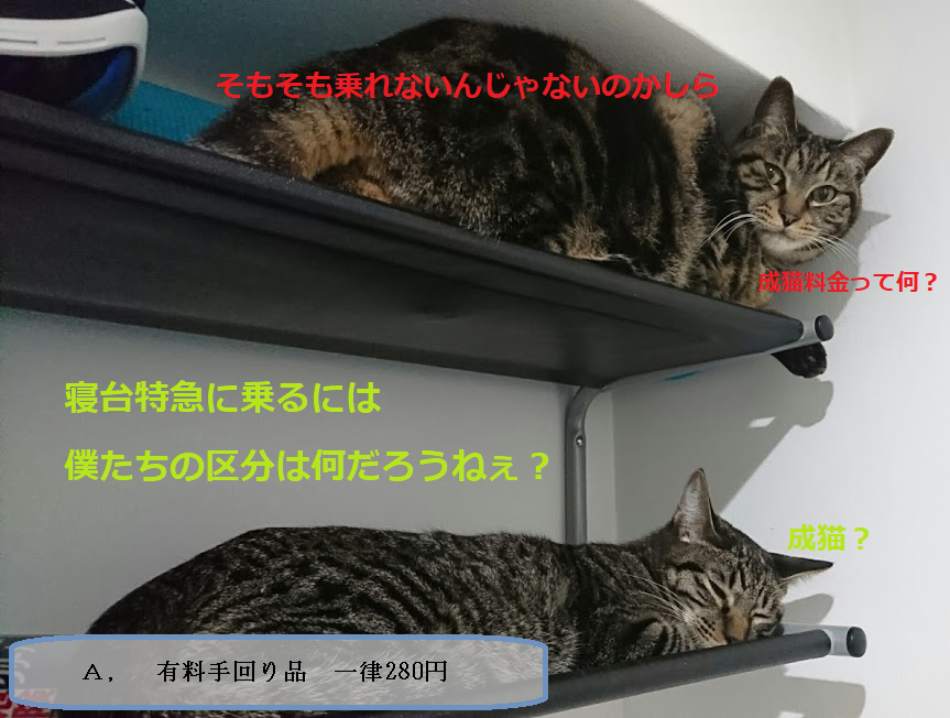 猫ちゃんとお出かけするには 旅行に連れて行く時の注意点と必要なもの