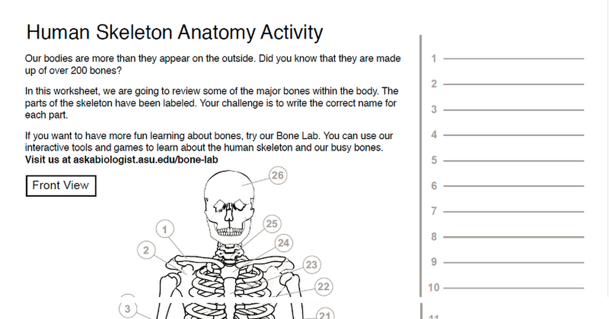 Human Skeleton Anatomy Activitycx Google Drive