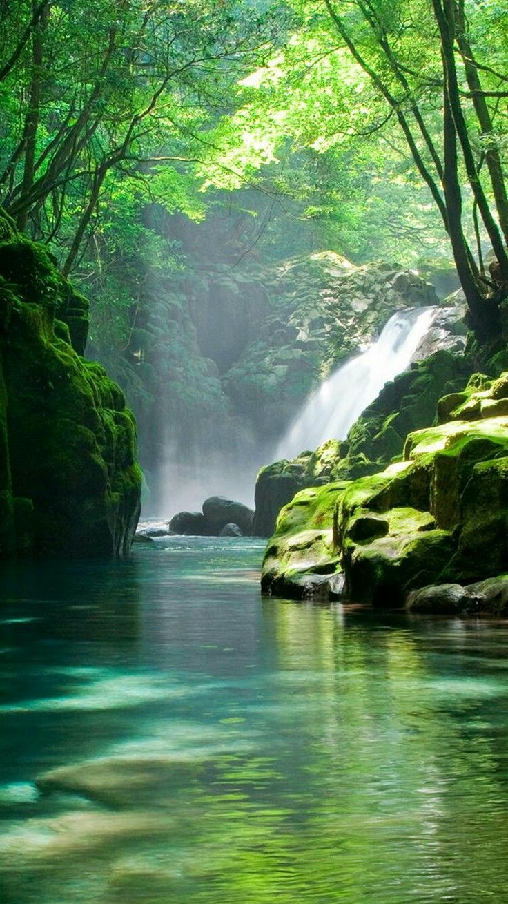 "The Healing Power of Nature: ""Shinrin-Yoku"""