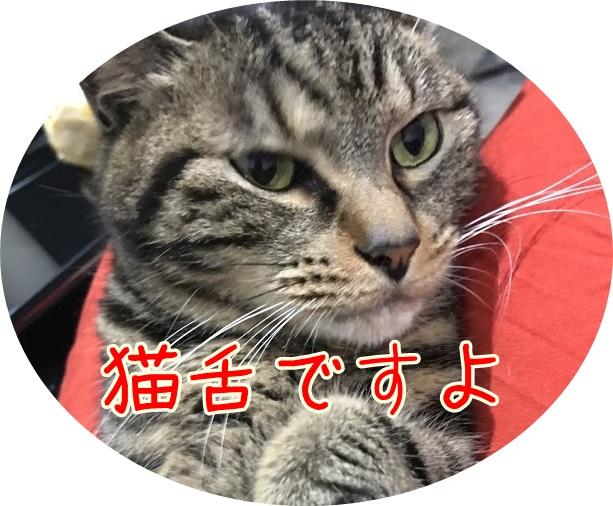 舌をしまい忘れた猫の顔が好き!忘れる理由とは?猫舌って本当?猫の舌にまつわるお話