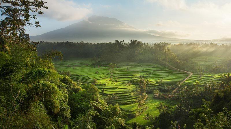 Sidemen sawah Bali