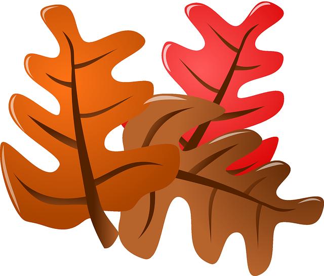 Leaves, Autumn, Fall,