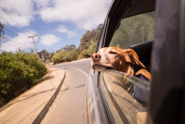 Travel-Friendly Dog Breeds That You Can Take Anywhere
