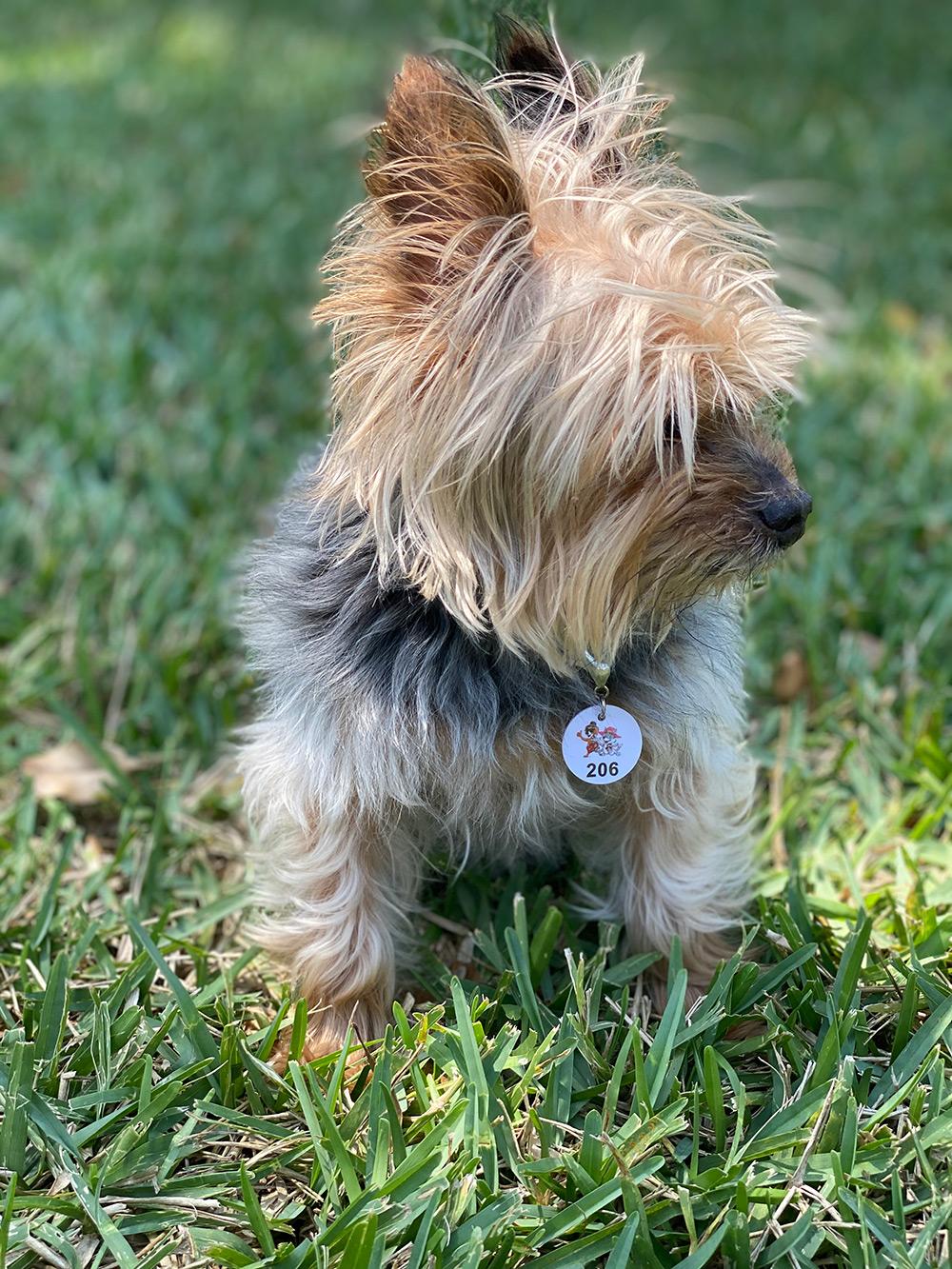 Sync Pet Collar Tag