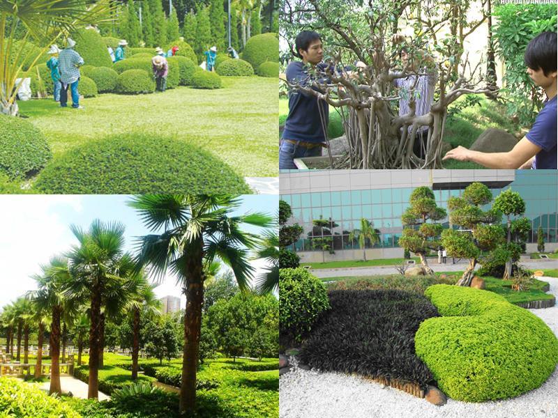 Kết quả hình ảnh cho chăm sóc cây xanh định kỳ