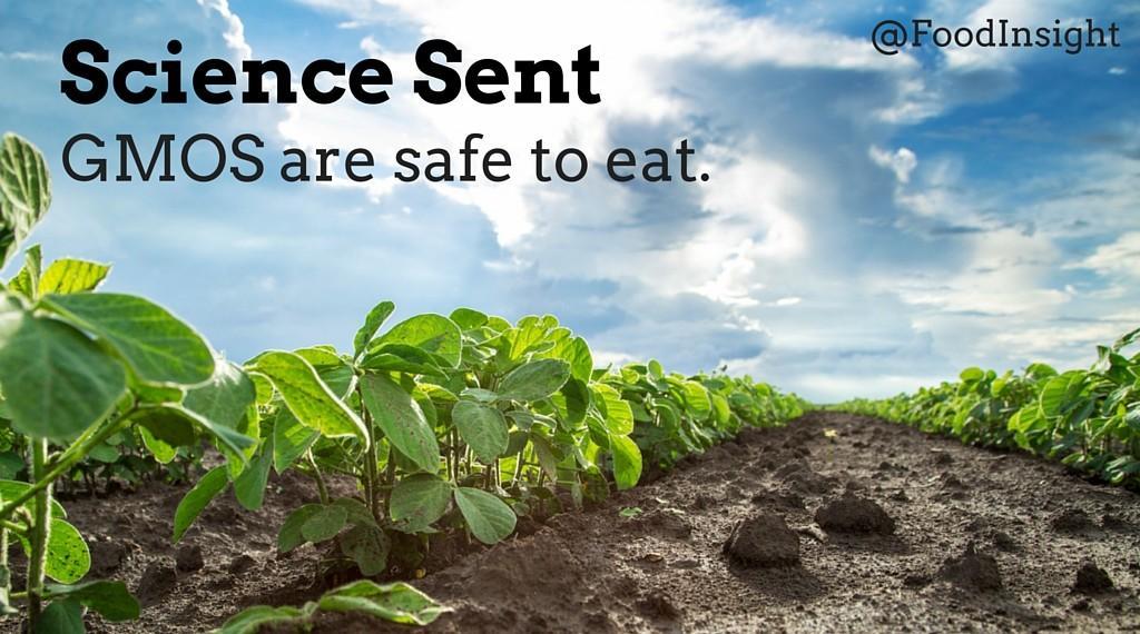 gmos safe to eat_0.jpg