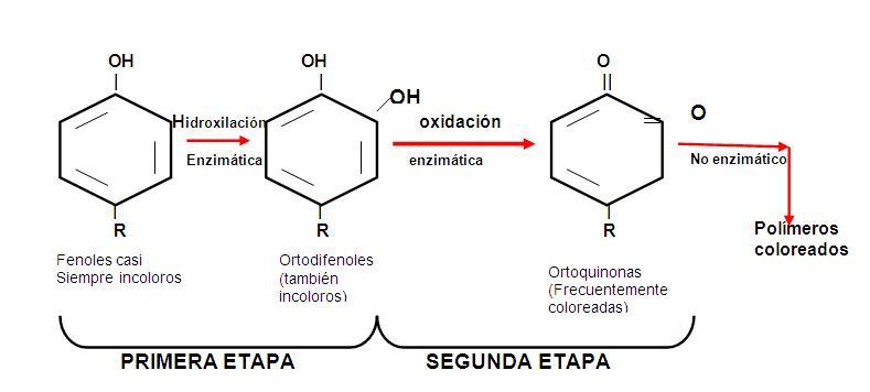 Quimica de alimentos for Quimica de los alimentos pdf