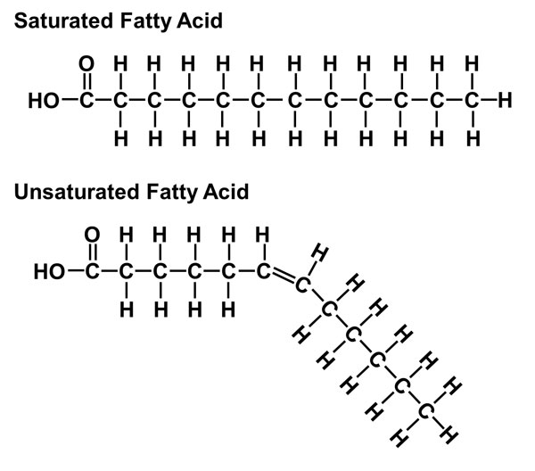 saturated fats and unsaturated fats