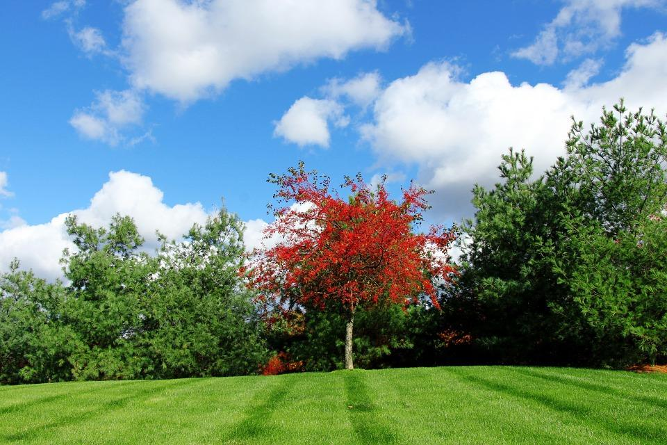 Red Tree, Green Tree, Grass, Stand Out, Different