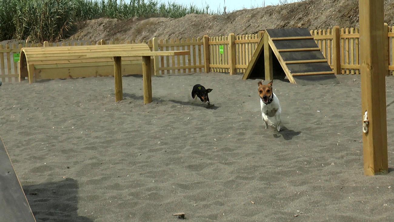 Torre del Mar playa canina
