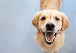 Obraz znaleziony dla: usmiechniety pies