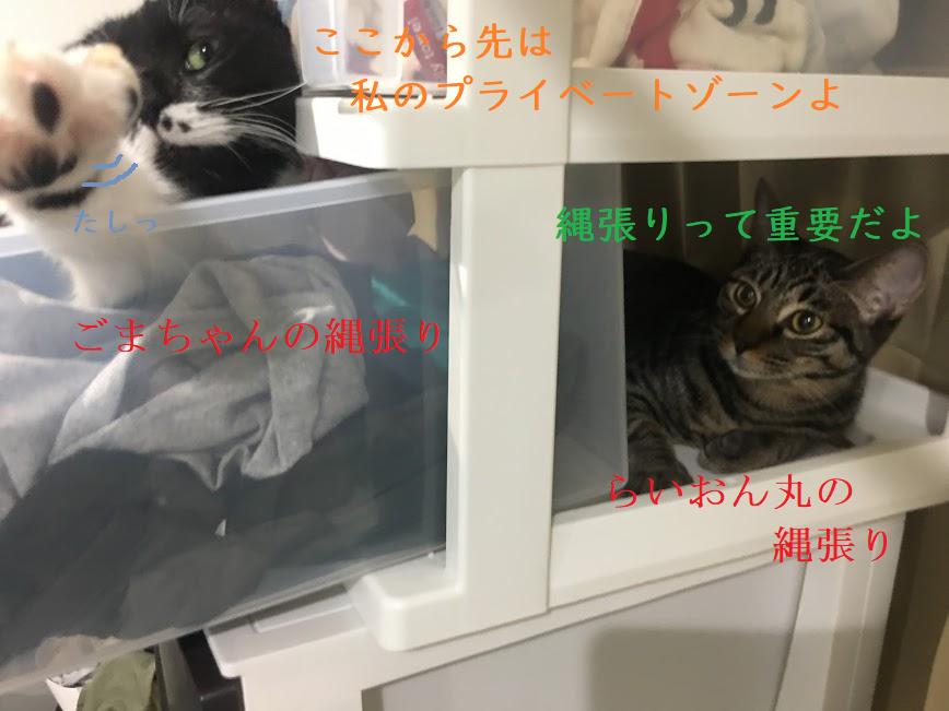 猫と人間の赤ちゃんの付き合い方とは?同居の注意点と共生生活