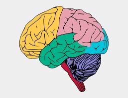 Free Colorful Brain Clip Art - Clip Art The Brain, Cliparts & Cartoons - Jing.fm